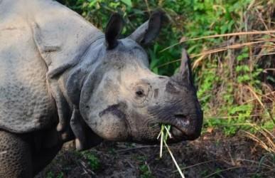 Nepal Verlängerung im Chitwan Nationalpark (Fühlen durch Natur)
