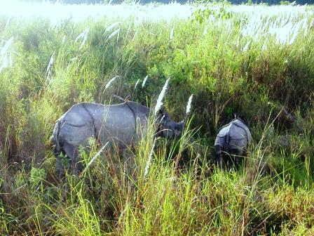 Nachwuchs im nepalesischen Dschungel