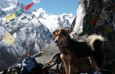 Nepal Langtang Trekking (Natur und Bewegung)