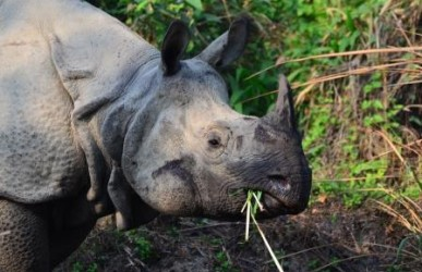 Nepal Verlängerung im Chitwan Nationalpark