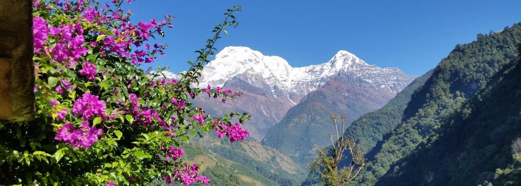 wunderschöner Blick auf den Annapurna South mit Bougainvilea