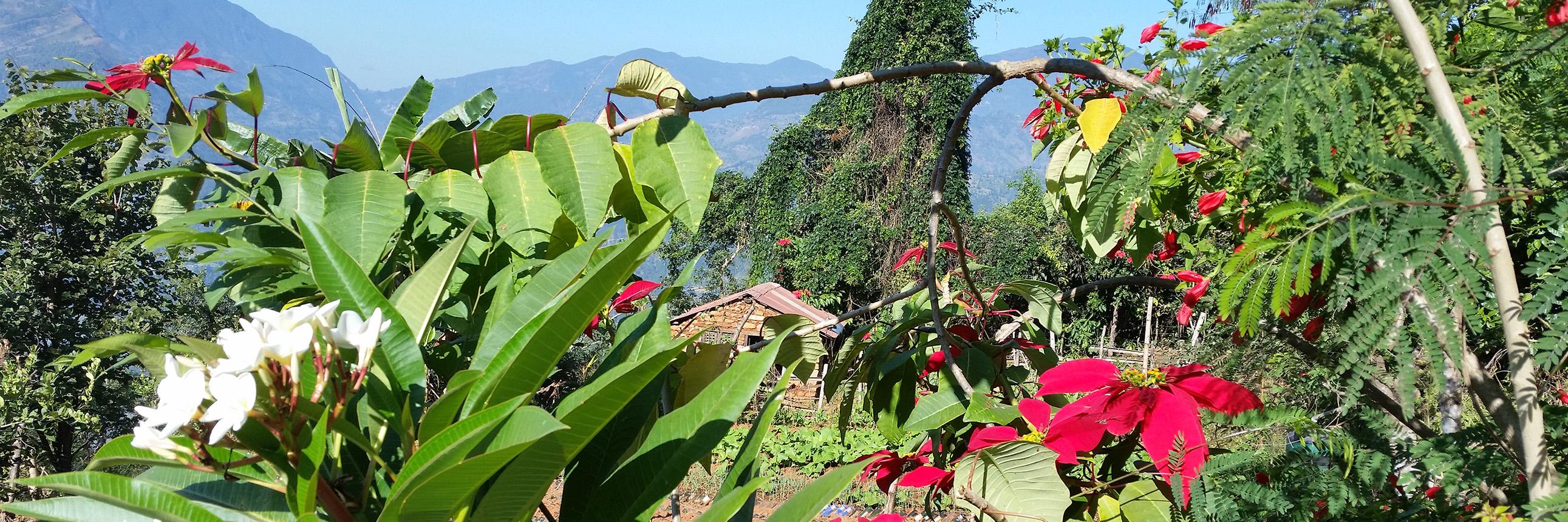 Bild aus dem Garten der Famous Farm in Nuwakot